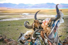 Cráneos animales en el lago Manansovar fotografía de archivo libre de regalías