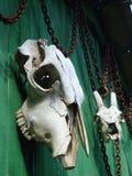 Cráneos animales a la pared de madera Foto de archivo