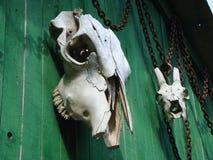 Cráneos animales a la pared de madera Foto de archivo libre de regalías