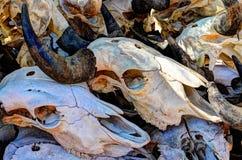 Cráneos blanqueados Imagen de archivo