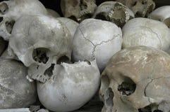 Cráneos en una pila imagen de archivo libre de regalías