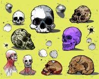 Cráneos humanos Imágenes de archivo libres de regalías