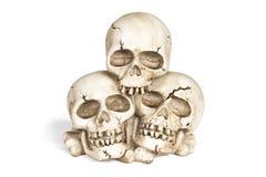 Cráneos humanos Foto de archivo libre de regalías