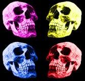 Cráneos humanos coloreados, modelo inconsútil del fondo imagen de archivo