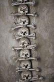 Cráneos humanos con los huesos Imagen de archivo libre de regalías