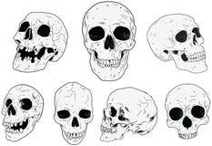 Cráneos - mano dibujada ilustración del vector