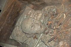 Cráneos viejos Fotos de archivo