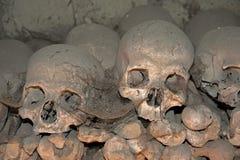 Cráneos viejos Fotografía de archivo