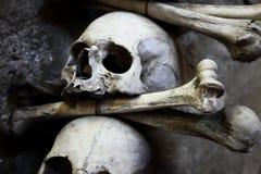 Cráneos y huesos imagen de archivo libre de regalías