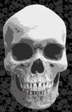 crâne Photographie stock