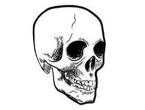 Crâne Images stock