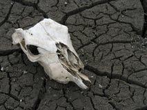 Crâne animal Photo libre de droits