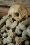 Crâne au-dessus de la pile d'os photographie stock