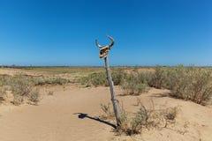 Crâne avec des klaxons sur le sable Image libre de droits