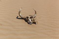 Crâne avec des klaxons sur le sable Photo stock