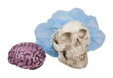 Crâne avec le filet de cheveux avec des cerveaux voisins photo stock