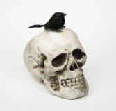 Crâne avec le merle Image stock