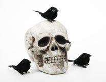 Crâne avec trois merles Images stock
