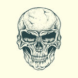 Crâne d'humain Photos stock