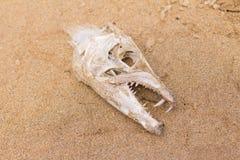 Crâne d'os de poissons Photo libre de droits