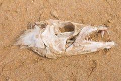 Crâne d'os de poissons Image libre de droits