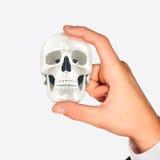 Crâne dans des mains Photo stock