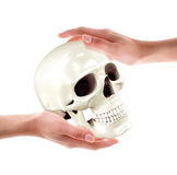 Crâne dans des mains Image stock