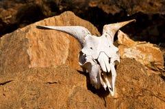 Crâne dans le désert Image stock