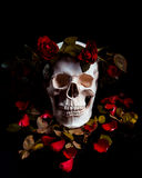 Crâne dans les roses Photo libre de droits