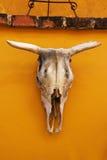 Crâne de bétail Image libre de droits