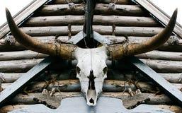 Crâne de Buffalo photo libre de droits