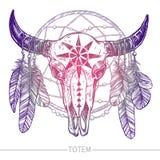 Crâne de Buffalo avec des plumes et Dreamcatcher Photographie stock