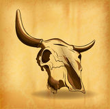 Crâne de Bull Photo stock
