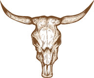 Crâne de Bull Photo libre de droits