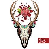 Crâne de cerfs communs Photo libre de droits