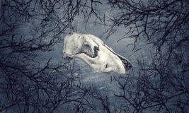 Crâne de chien entouré par des branches photos libres de droits