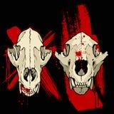 Crâne de coyote de grange illustration de vecteur