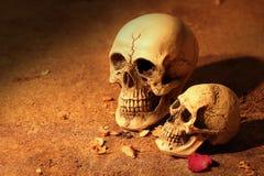 Crâne de deux humains Photo stock