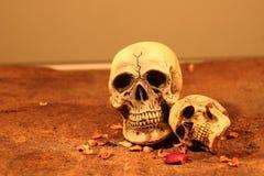 Crâne de deux humains Photo libre de droits