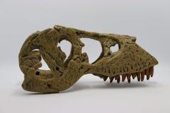 Crâne de dinosaure sur le fond blanc images libres de droits