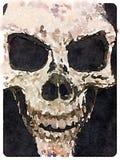 Crâne de DW Photographie stock libre de droits