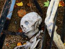 Crâne de Halloween Images stock