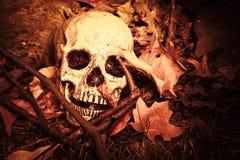 Crâne de Lightpainted Images libres de droits