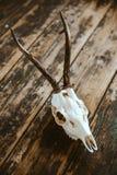 Crâne de mâle sur de vieux conseils Image stock