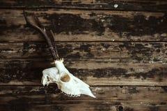 Crâne de mâle sur de vieux conseils Photo libre de droits