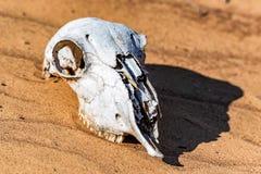 Crâne de moutons dans la fin de sable Images libres de droits