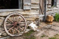 Crâne de roues et de vache Photos stock
