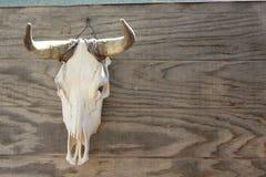 crâne de taureau Image libre de droits
