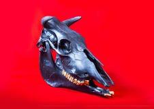Crâne de taureaux Images stock