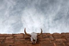 Crâne de vache Photographie stock